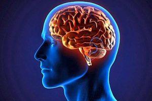 خواص خرما در بهبود عملکرد مغز