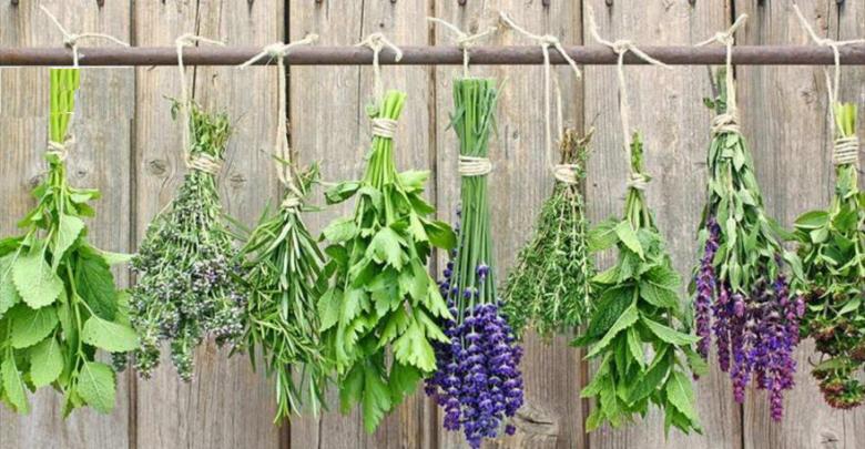 کسب و کار با گیاهان دارویی