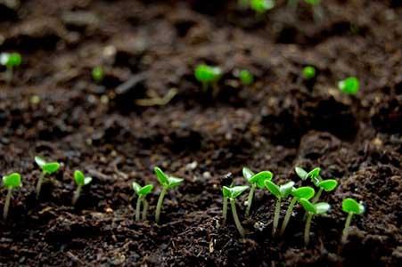 ورمی کمپوست جایگزینی مهم برای کودهای شیمیایی در بخش کشاورزی