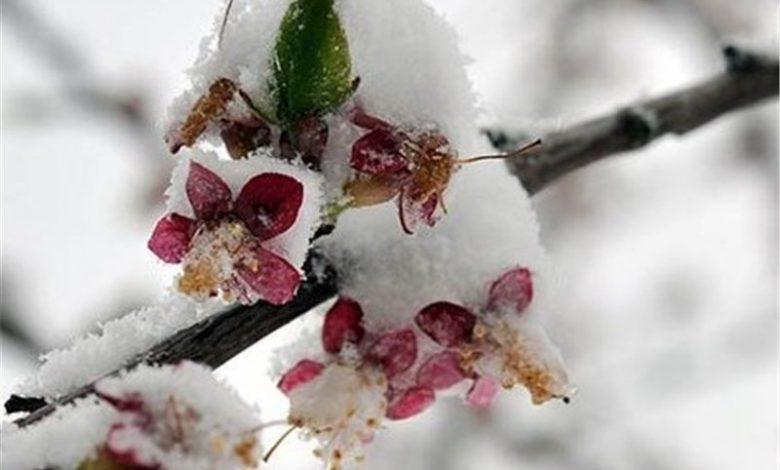 برف بهاری، مهمان ناخوانده خراسان شمالی