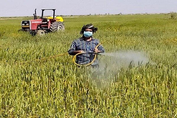 مبارزه با بیماریهای غلات درسطح ۱۸۴۰هکتار از مزارع کشاورزی شهرستان البرز