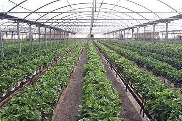 توسعه گلخانهها در مناطق مرزی برای فرار از هزینههای حمل