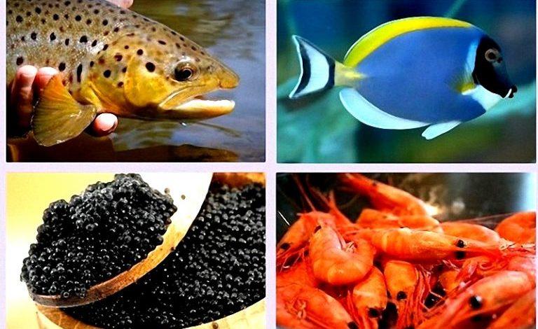 صادرات ۲۳.۴ هزار تن ماهی و آبزیان دریایی طی ۳ ماه