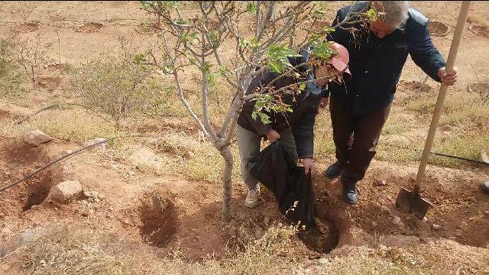 چالکود، طرحی نو در تغذیه درختان میوه