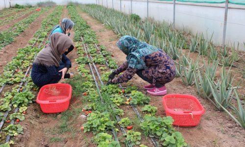 توانمندسازی زنان روستایی و عشایری در عرصه های کشاورزی