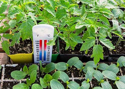 توصيه های هواشناسی کشاورزی از تاريخ 2 آذر لغايت 5 آذر ماه 1399