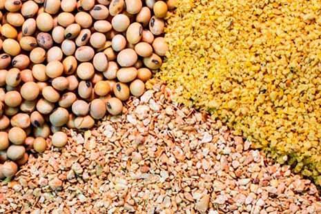 مرغها کنجاله سویا میخورند یا شن و پودر آجر؟ اختلاط ۲۳ درصدی کنجاله سویای توزیعی دولت با خاکستر