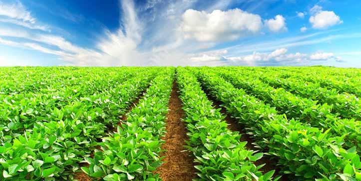 کشاورزی قراردادی، سرمشق توسعه بخش کشاورزی
