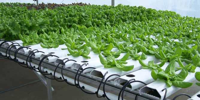 ایجاد گلخانه سبزی و صیفی به روش هیدروپونیک در دهاقان
