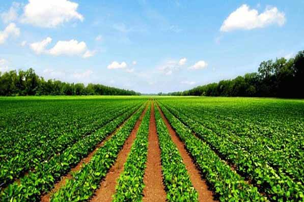 بیش از ۸۰ درصد کشاورزی کشور خرد است