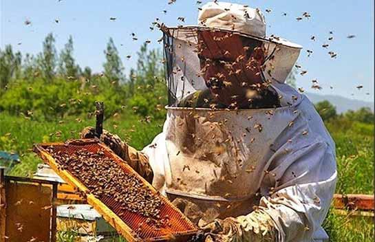 توصیههایی به دامداران، مرغداران و زنبور دارن برای مقابله با سرمای ناگهانی