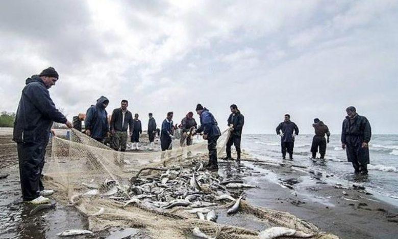 صید ماهیان استخوانی در مازندران ۳۱ درصد کاهش یافت