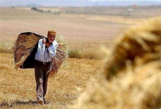 کمک فائو برای مهارت آموزی و افزایش درآمد کشاورزان ایرانی