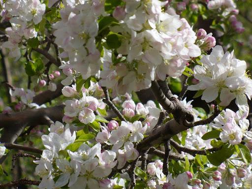 بهار زودرس در خراسان شمالی