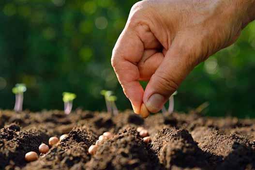 خرید بذور علوفه با ارز نیمایی برای کشاورزان غیرممکن است
