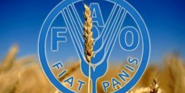 همکاری فائو و ایران برای تقویت نوآوری در کشاورزی