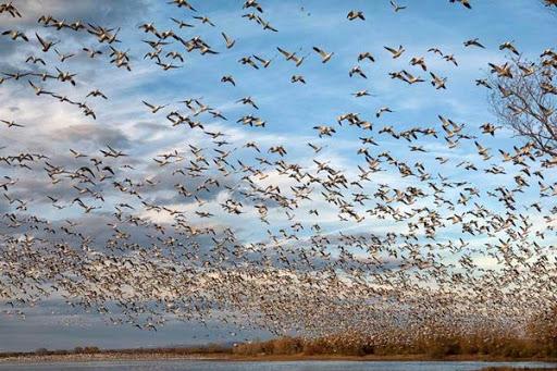 ۲ کانون آنفلوآنزای فوق حاد پرندگان در کردستان شناسایی شد