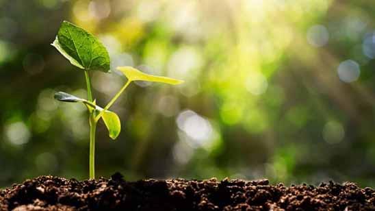 نور و تأثیر آن بر رشد گیاه