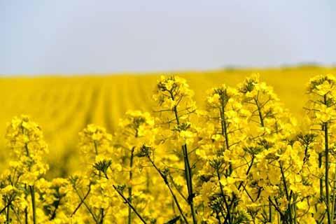 چرا مدیریت بحران در کنترل عوامل خسارتزای گیاهی ضروری است؟