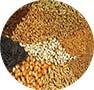 نهاده های کشاورزی، دام، طیور و آبزیان