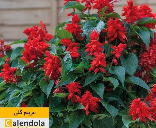 فروشگاه آنلاین گیاهان دارویی کالندولا