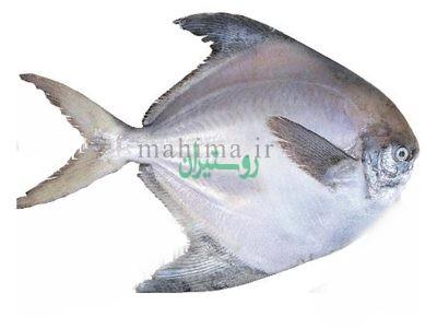 فروشگاه آنلاین ماهی و میگو جنوب ماهیما