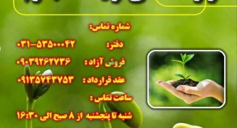 انواع نشا صیفی جات و سبزی جات و گیاهان دارویی گل