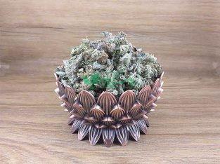گیاهان داروئی سید عطار