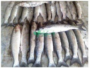 شرکت پاک صید شیلات