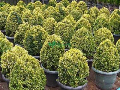 گیاهان فضای باز گیاهان