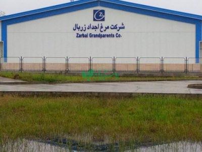 شرکت مرغ اجداد زربال