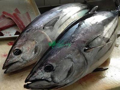 عمده فروشی ماهی بندر شیلات