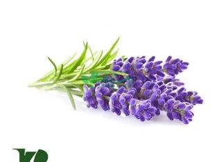 گیاهان دارویی هفت پر