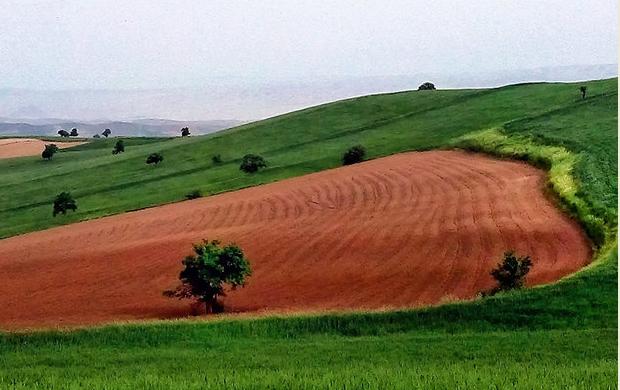 در انگلستان ۲۰ میلیون هکتار زمین کشاورزی وجود دارد؛ معادل ۳۰ میلیون زمین فوتبال