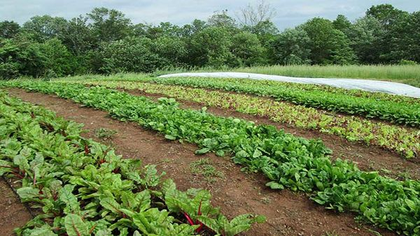 کار افرینی در روستا با مزرعه سبزیجات