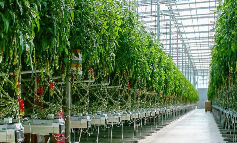 عملکرد و نکاتی درباره سیستمهای گرمایشی در گلخانه