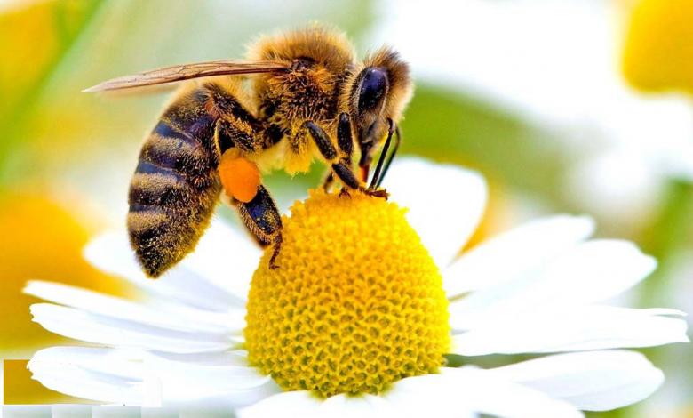 محصولات تولیدی زنبور عسل کدامند