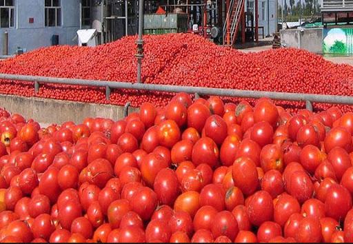 صادرات 310 میلیون دلاری محصولات کشاورزی آذربایجان شرقی در ده ماهه نخست امسال