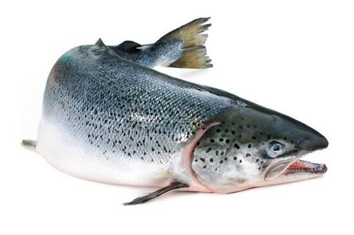 افزایش 30 درصدی تولید ماهی قزل آلا در مراغه