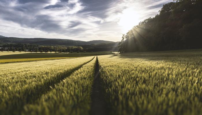 توصيه های هواشناسی کشاورزی از تاريخ اول مرداد لغایت پنج مرداد 99