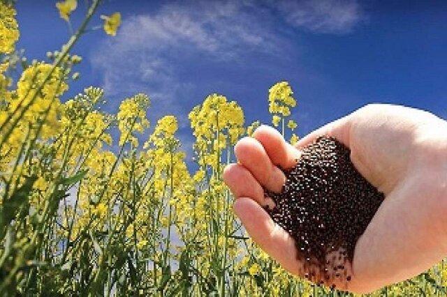 دستیابی به رکورد جدید تولید هستههای اولیه بذر در کشور
