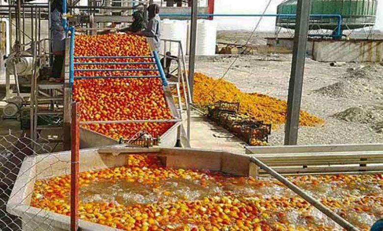 بخش کشاورزی شرق گلستان نیازمند صنایع تبدیلی