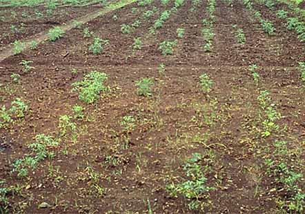 ناکارآمدی نیمی از سطح زیرکشت شهرستان زراعتخیز ابرکوه