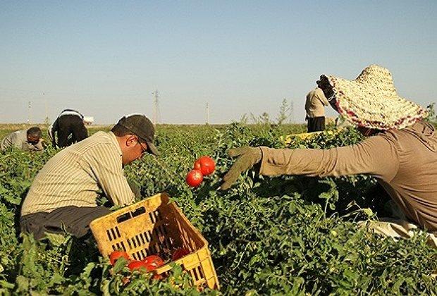از کشاورزی استان مرکزی چه خبر؟