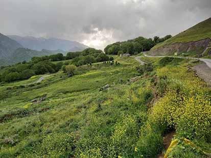 استفاده از سم کونفیدور در مزارع کردستان ممنوع شد