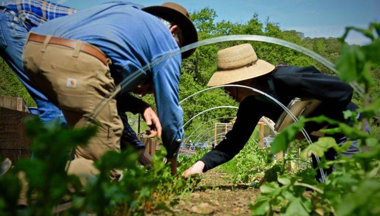 مقایسه کشاورزی بیودینامیک با سایر روش های مرسوم