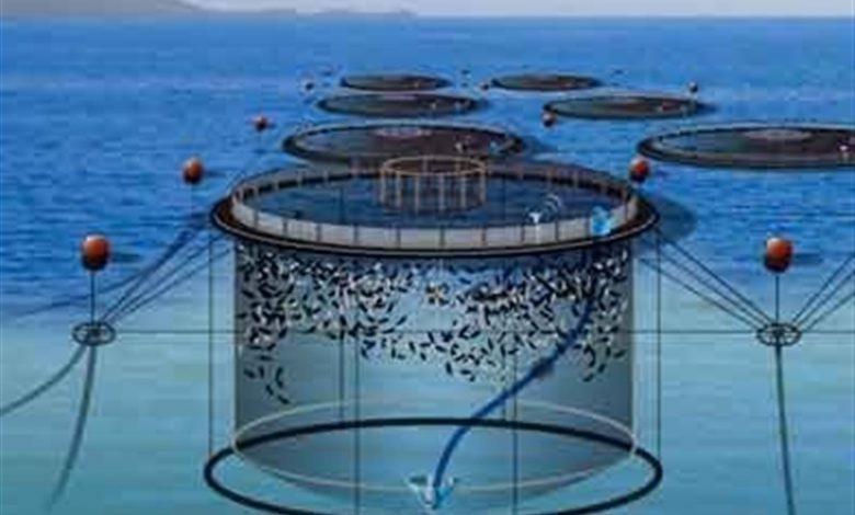 نیاز به تولید واکسن برای توسعه پرورش ماهی در قفس