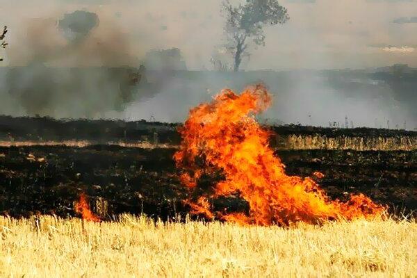 کشاورزان بعد از برداشت محصول، مزارع خود را آتش نزنند