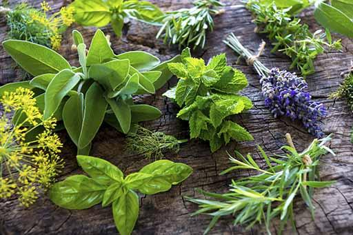 گیاهان دارویی در بند خامفروشی