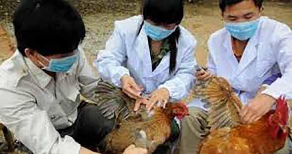 آنفلوانزای فوق حاد پرندگان H۵N۸ در ژاپن مشاهده شد
